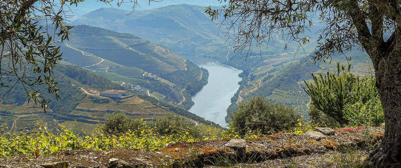 Douro Vineyards Hike