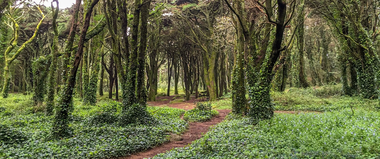 Sintra Heritage & Coastal Trails - Portugal Nature Trails