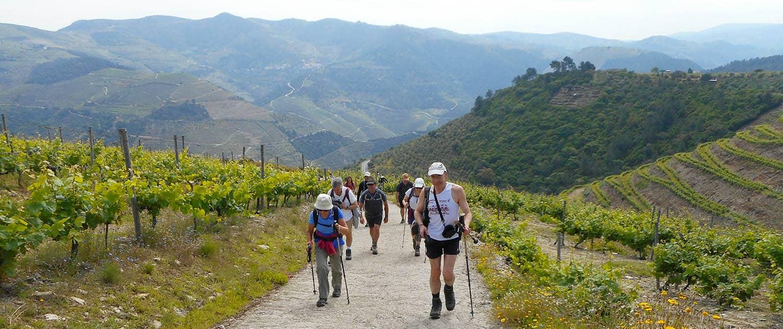 Douro Vineyards Hike - Portugal Nature Trails